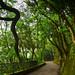 Park Trail at Victoria Peak Hong Kong