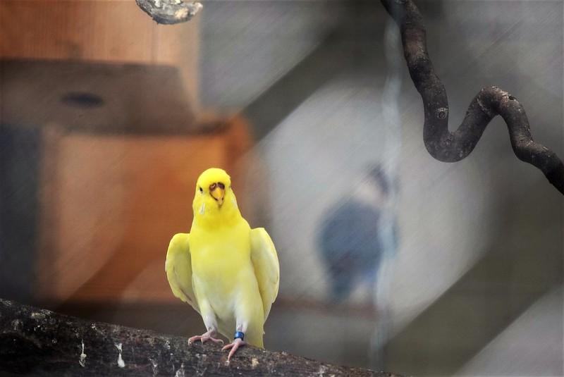 Birds 02.07 (10)