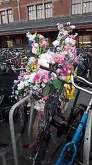 Groen fiets (Avril 2018)