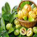 Herbal Supplements - Are You At Risk With GARCINIA CAMBOGIA