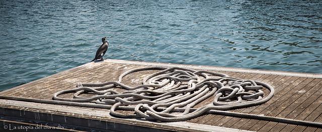 ¿Qué pasaría si dejamos libres a todos los pájaros que tenemos en nuestra cabeza?