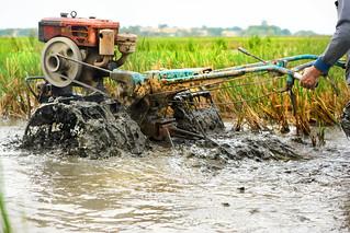 Farmer tilling his rice paddy