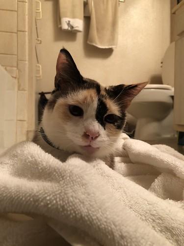 Bath Cat