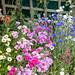 Scotland's Gardens Craigintinney Telferton July 2018 -109