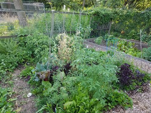 July 1 Garden