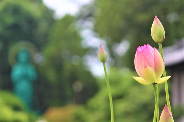 seidaiji-hasu006