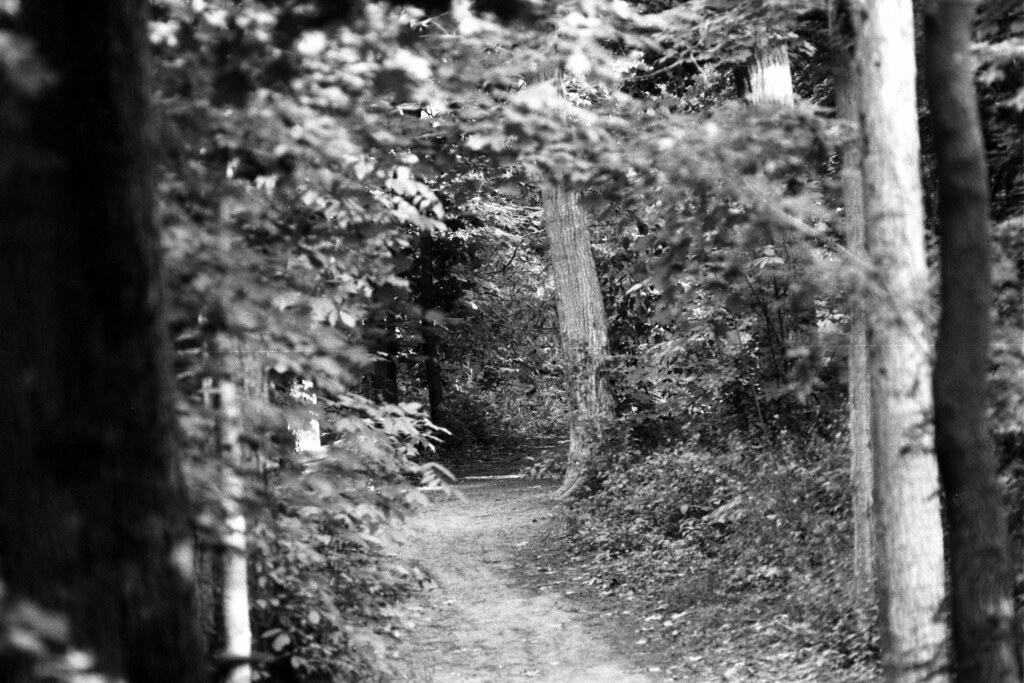 Forested Trail | The shadowy entrance to a forested trail in