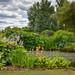 Emley Open Garden