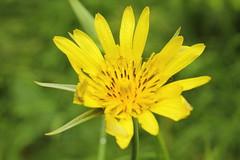 Mount Dajti National Park - flower 1