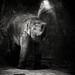 Young Elefant