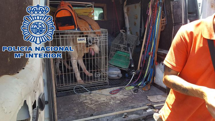2018-07-13 Algeciras intervención con perros (2)5