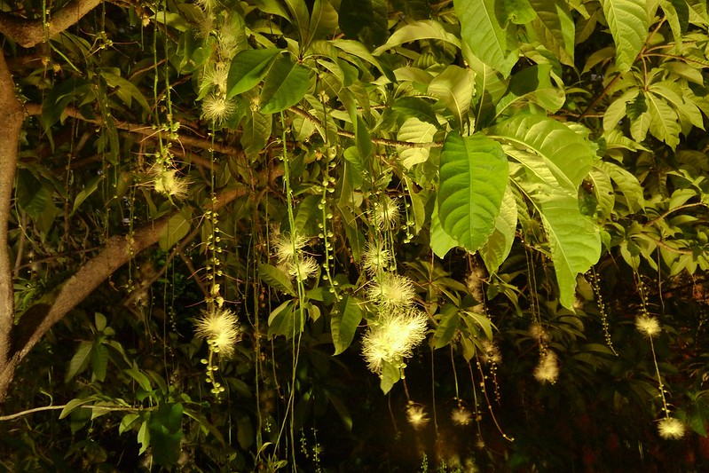 夜遊台北植物園到小南門
