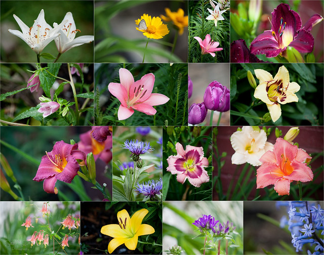 Flowers 2018