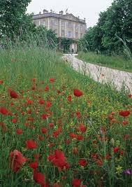 Wild Flowers Inspiration : Highgrove meadow. The poppies are so beautiful.