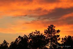 [In Explore] Forêt de Moulière au couchant | Moulière forest at sunset - Photo of Liniers