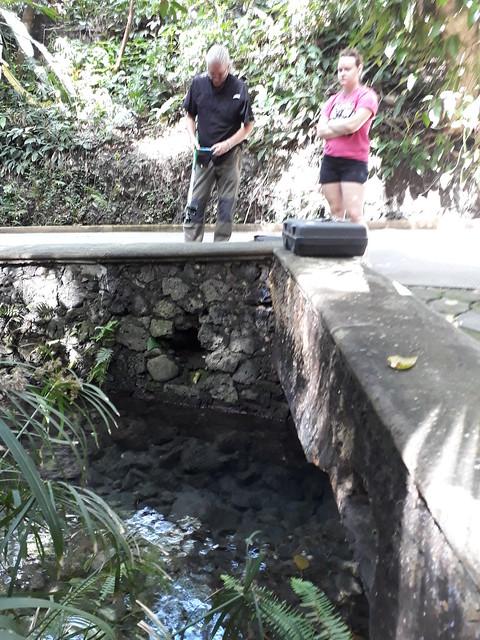 Especies exóticas - invasoras. Parque Estatal Urbano Barranca de Chapultepec
