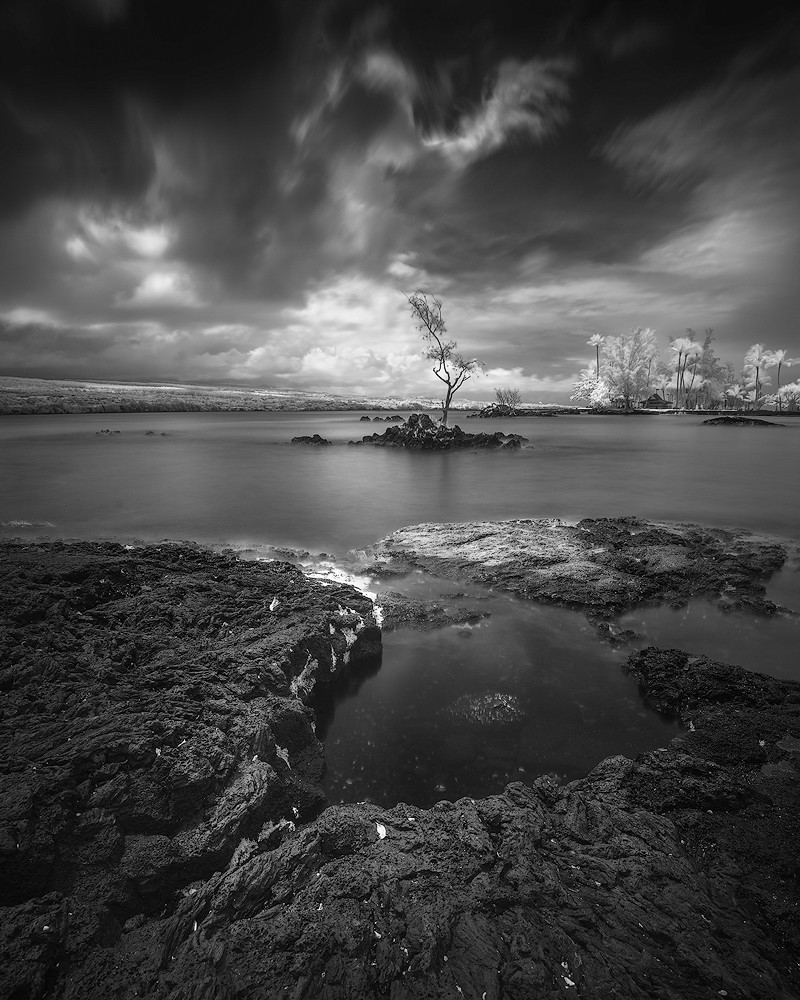 Hilo Bay Tree Black And White Ive Been Awfully Busy With Flickr
