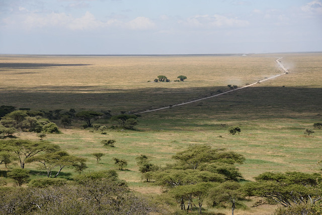 Road to Serengeti