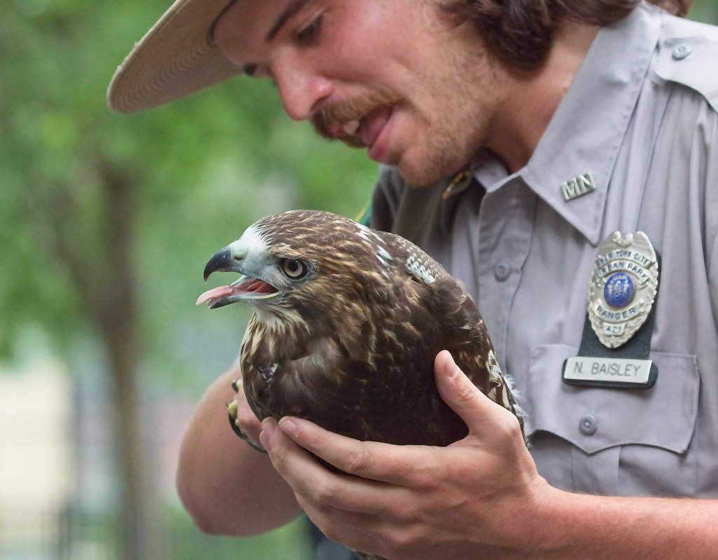 Urban Park Ranger rescues hawk in Tompkins Square