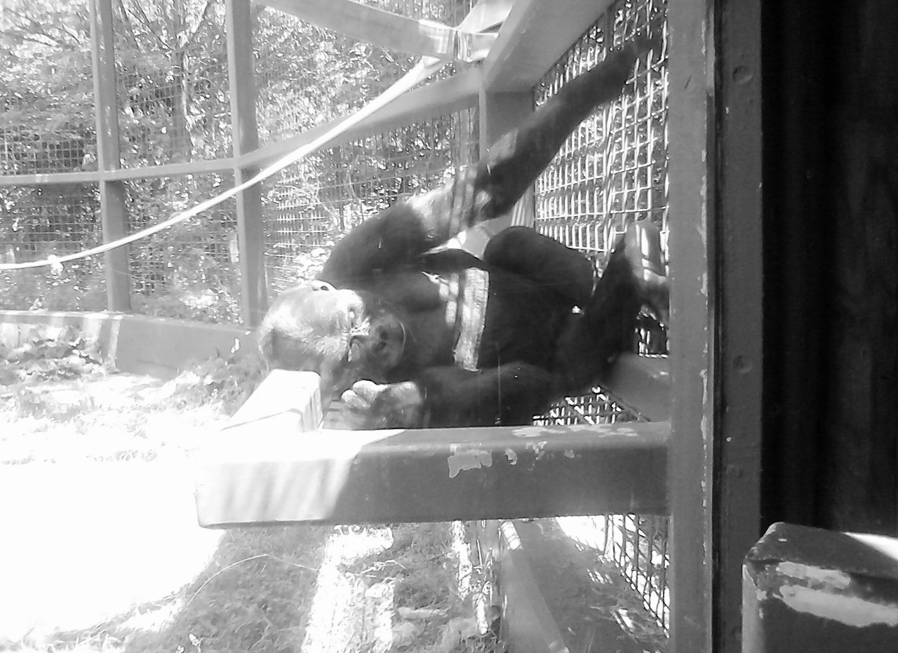 Columbus Zoo BW 5-31-2014 12-56-43 PM