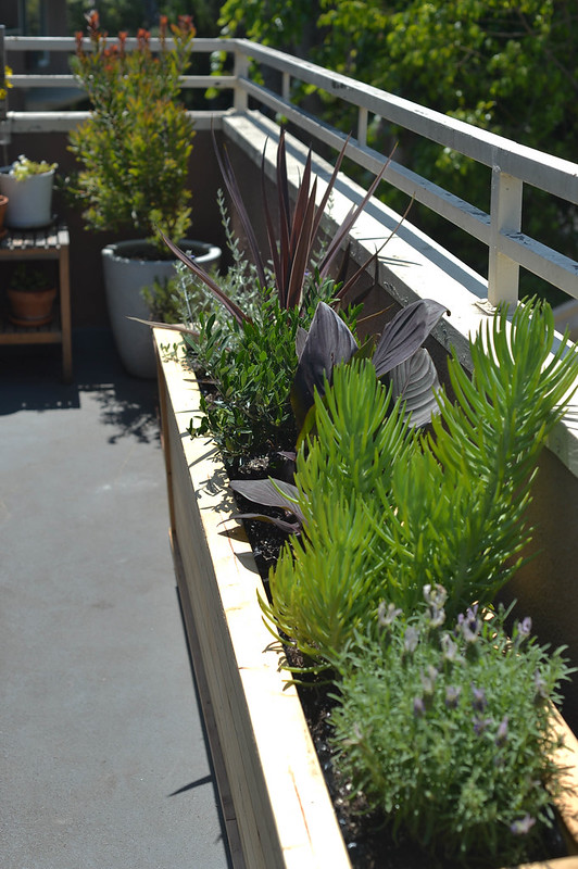 new plants & planter box made by imo!