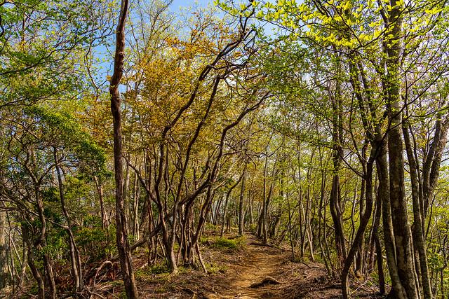 鮮やか若葉色の登山道