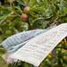 Scotland's Gardens Craigintinney Telferton July 2018 -130