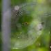 Backlit web