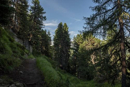 Waldbaden-Yoga-Aletschwald