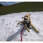 Gromit loving the snow