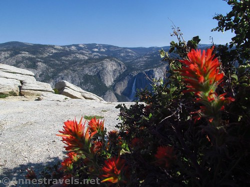 Paintbrush on Sentinel Dome, Yosemite National Park, California