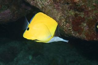 yellow picker