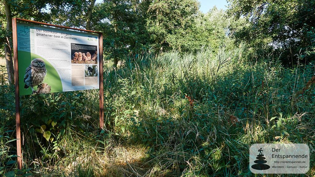 Biotop an der Hiwweltour Zornheimer Berg