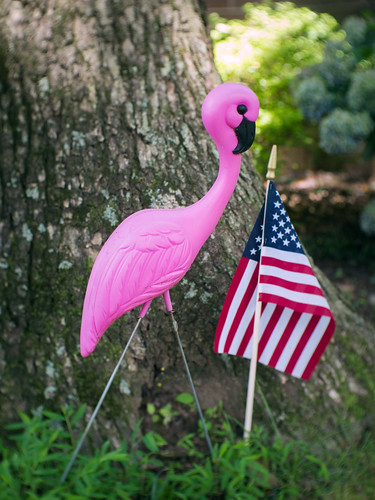 Flamingo & flag