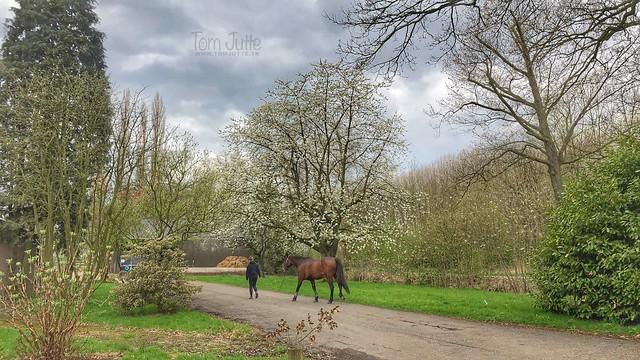 Lente wandeling, Klompenpad, Zeist, Nederland - 0936