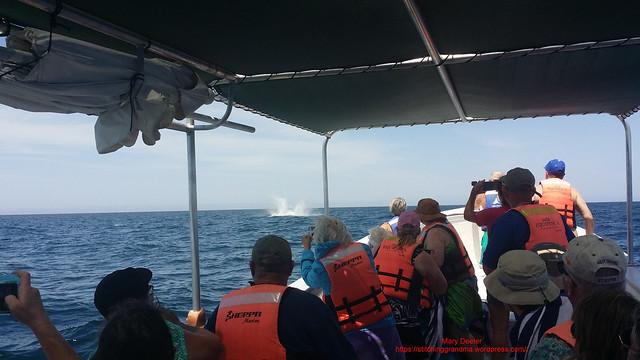 Ahoy WHALE LaPaz Mexico