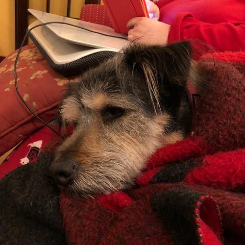 Snug as a dog in a rug.