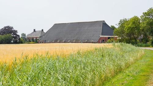 boerderij Hornhuizen