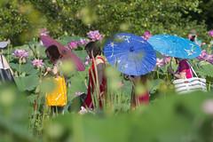 Picture parasols