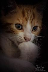 Cats cutee