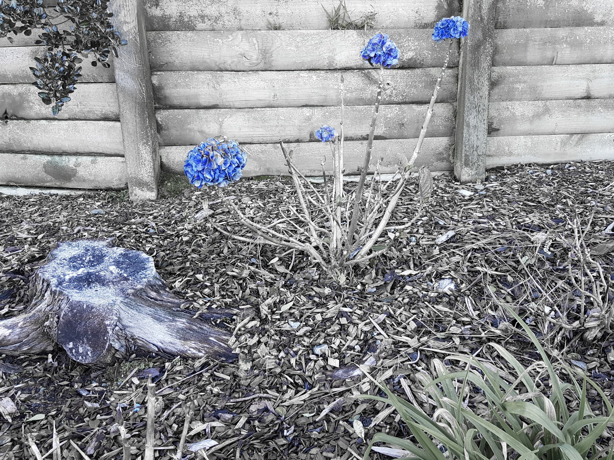 20180710_153555 EDIT (Bolder than blue)
