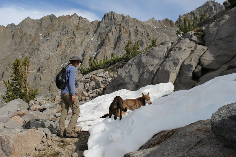 The dogs check out our first patch of snow on the trail at 11700 feet elevation