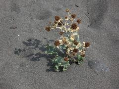 Колючки / Thorns