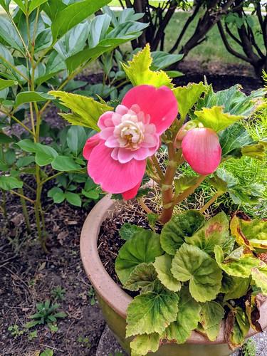 Summer flowering planted by irieknit