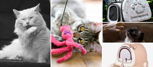 Tienda para gatos online