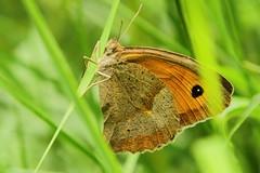 Mount Dajti National Park - butterfly 3