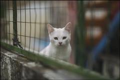 gato campero desconocido
