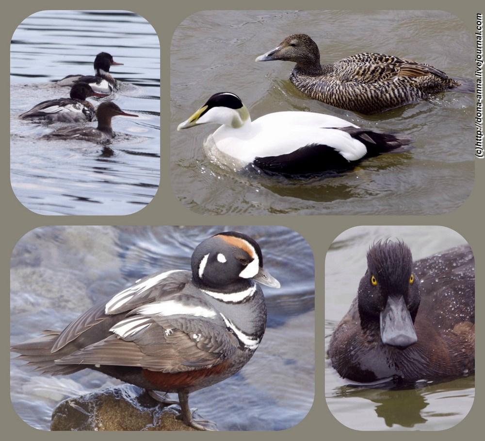 Birds-2-collage-a