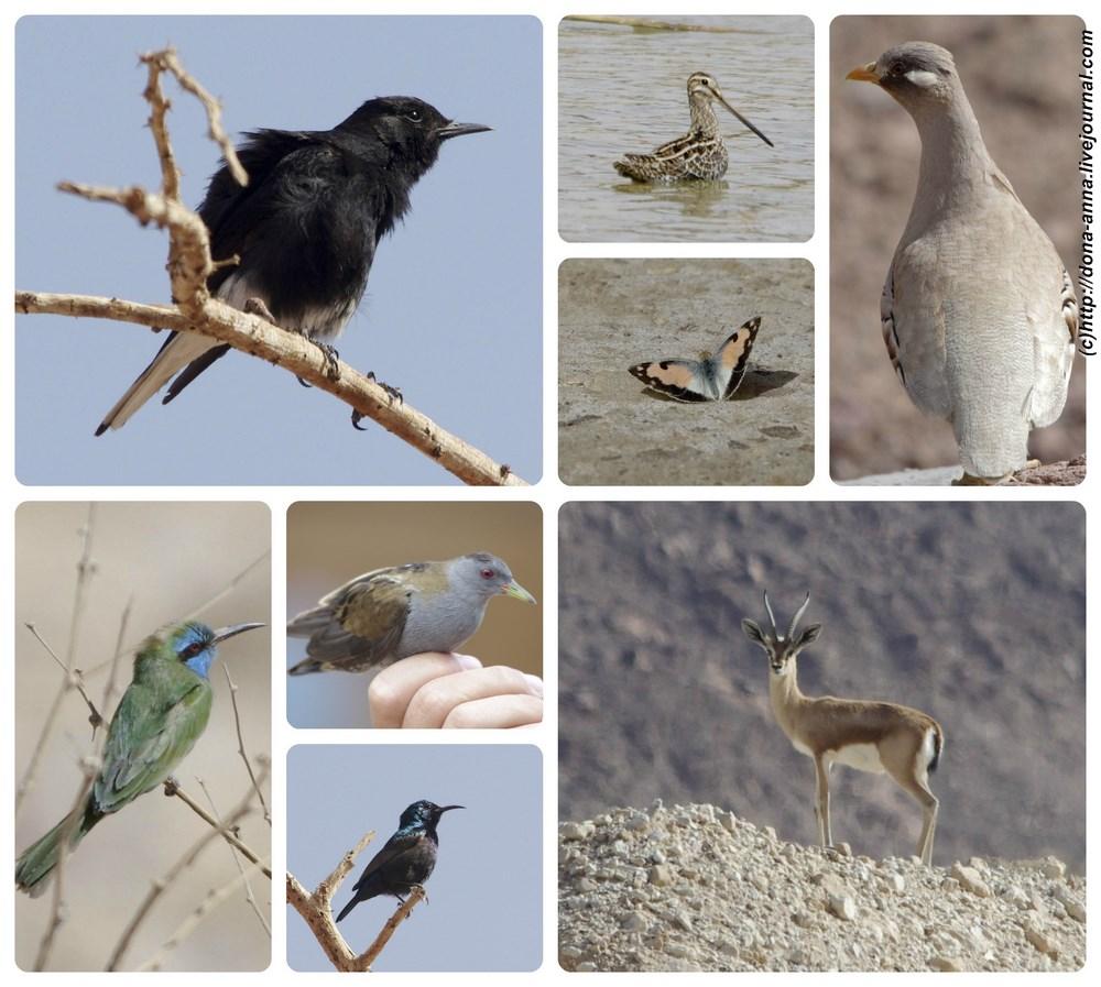 Eilat-collage-a