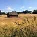 Sunny Cheshire pastures - off Hocker Lane